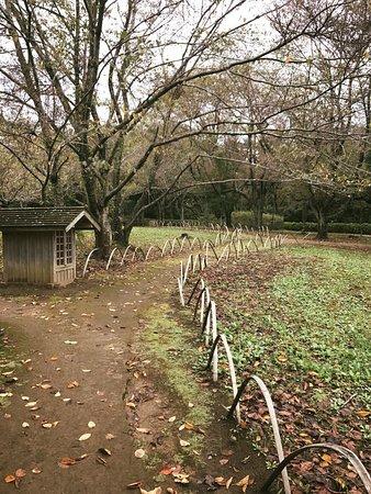 Narita Rainbow Tours: Touring the gardens