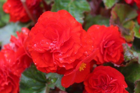 Coldstream, UK: Flowers