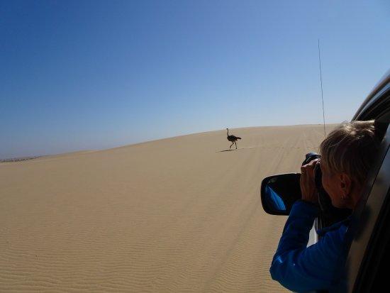 Walvis Bay, Namibia: Sandwich Harbour 4x4 Tour