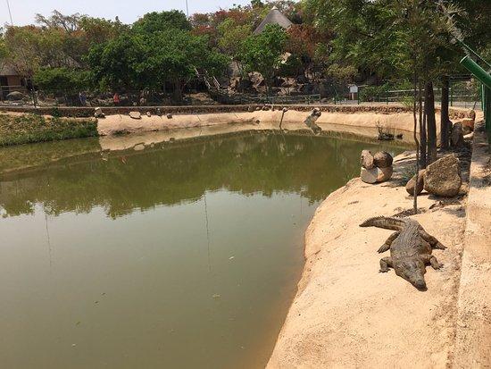 Pululukwa Resort: Crocodile lagoon