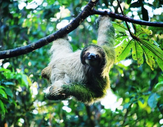 Rainforest wildlife of Costa Rica