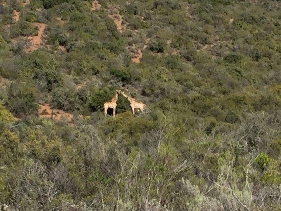 Oudtshoorn, South Africa: photo1.jpg