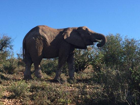 Oudtshoorn, South Africa: photo3.jpg