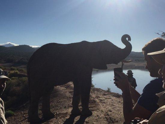 Oudtshoorn, South Africa: photo4.jpg