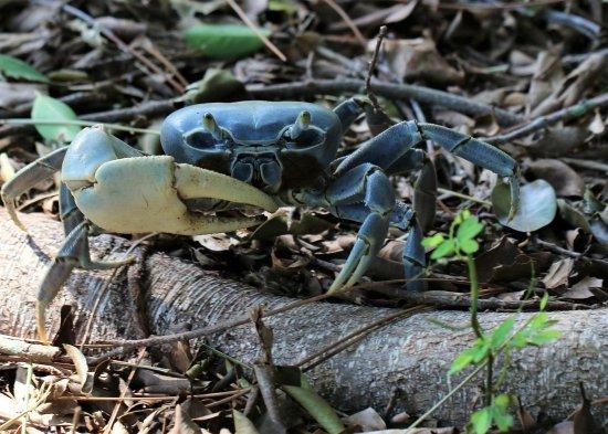 Port Saint Lucie, FL: Garden crab