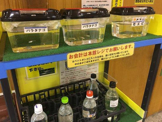 Kosai, Japan: photo4.jpg
