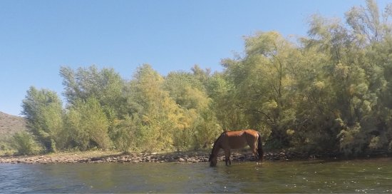 Saguaro Lake Guest Ranch: photo0.jpg