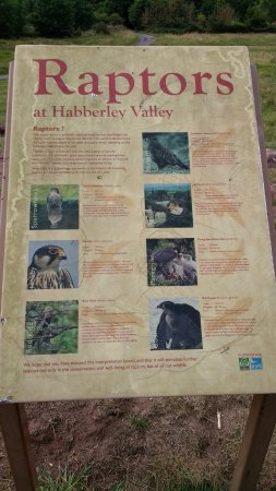 Information Board On What Raptors Birds Of Prey Can Be Found At Habberley Valley Picture Of Habberley Valley Local Nature Reserve Kidderminster Tripadvisor