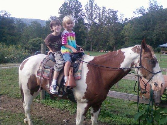 Burnsville, Carolina del Norte: Meet and visit with horses