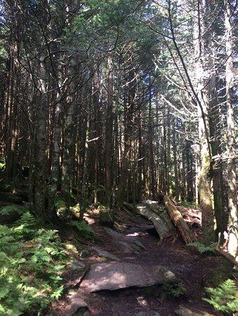 Mount Mitchell State Park: photo0.jpg