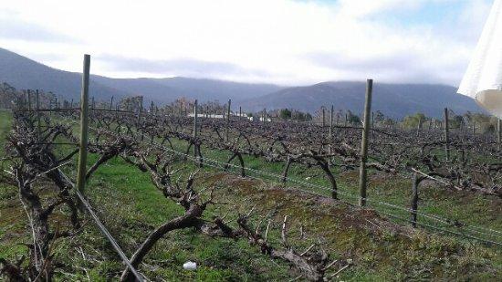 Bramon Wine Estate : The vineyards-beautiful day
