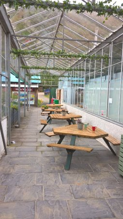The Tree Shop Cafe: Outdoor area seating