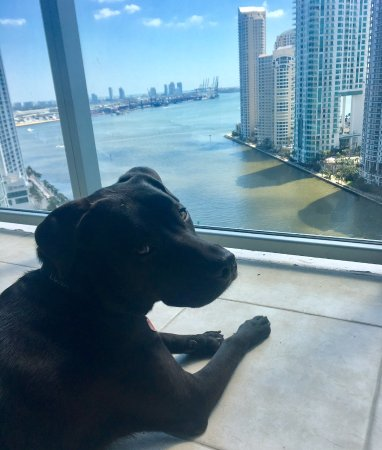Kimpton EPIC Hotel: Luna greatly enjoyed the view!