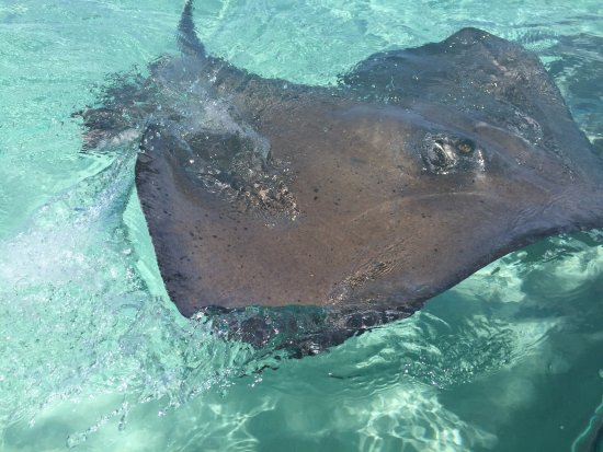 Acquarius Sea Tours : We got up close and personal with this beauty! Even got kisses from her! So amazing!