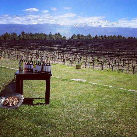 Ampora Wine Tours: IMG_20170922_175658_385_large.jpg