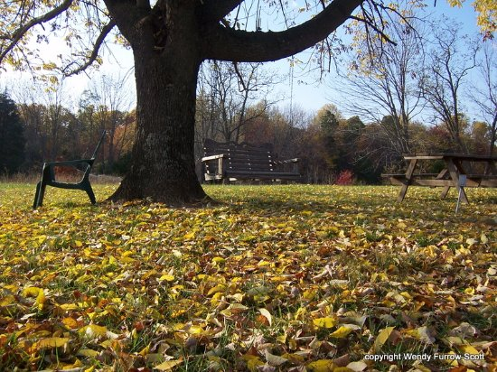 Hickory Hill Vineyards: Hickory Hill picnic area in the fall