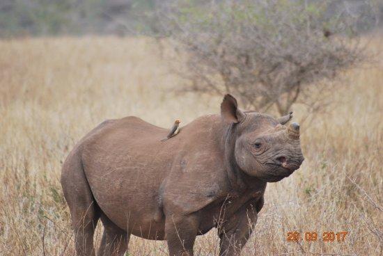 Mkuze, Νότια Αφρική: black rhino