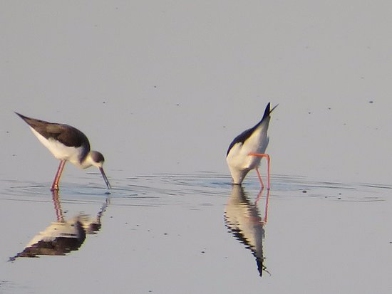 Malpartida de Plasencia, Spanyol: Mañana de bird watching en el Parque de Monfrague