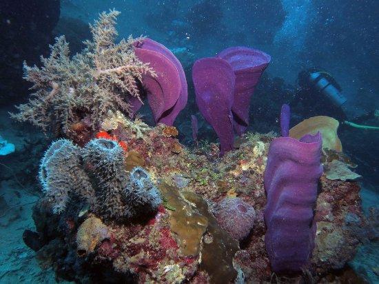 Tufi Resort dive site