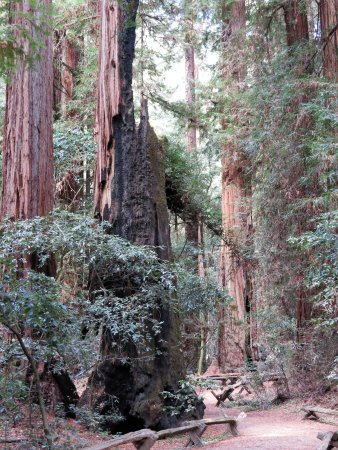 Armstrong Redwood State Reserve: An easy hike