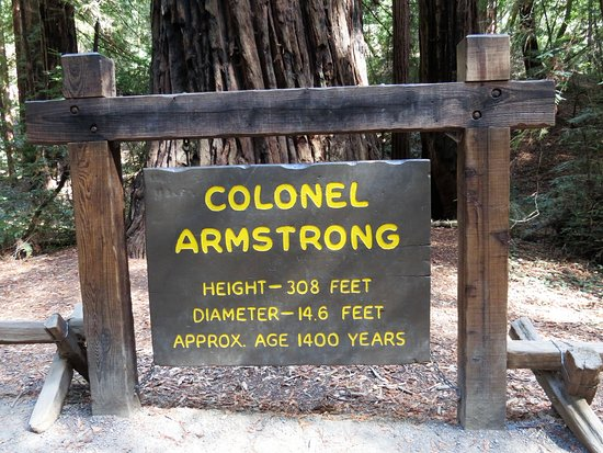 Armstrong Redwood State Reserve: One of the main attractions
