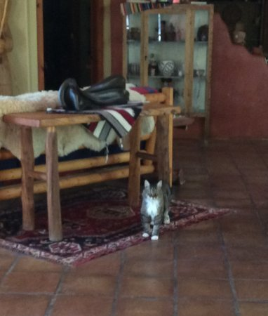 Canon del Rio Retreat & Spa: On Site Kitty!