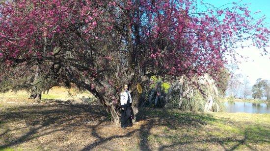 Пирке, Чили: Na área externa da vinícola..cheia de árvores e flores.. muito lindo !