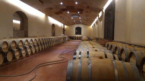 Пирке, Чили: Muito vinhoo !!
