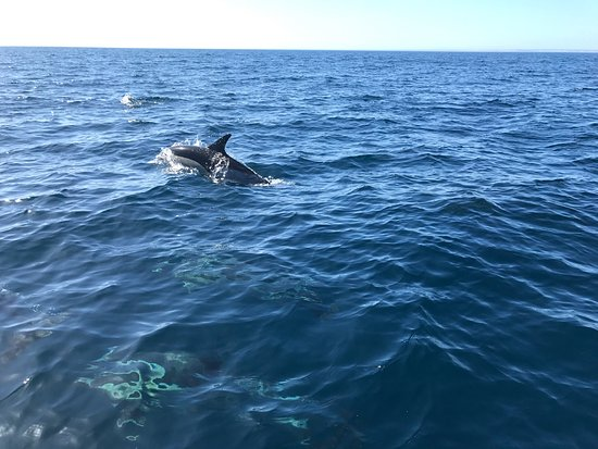 Sealife照片