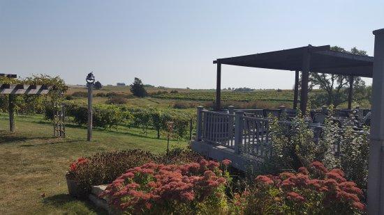 Famous Fossil Winery: Beautiful views!