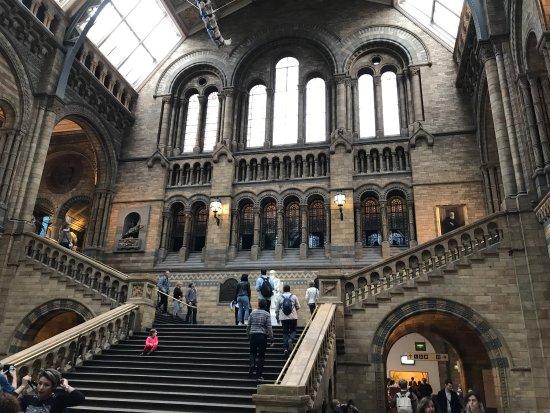 Musée d'histoire naturelle de Londres : Museu de História Natural, atração gratuita imperdível