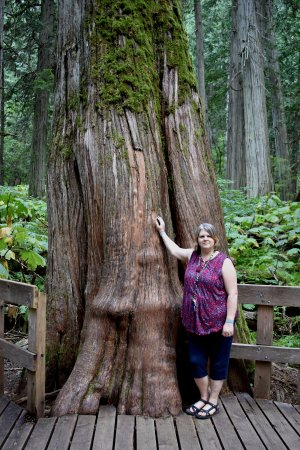 Giant Cedars Boardwalk Trail: This tree has personality plus, my daughter and I loved it.