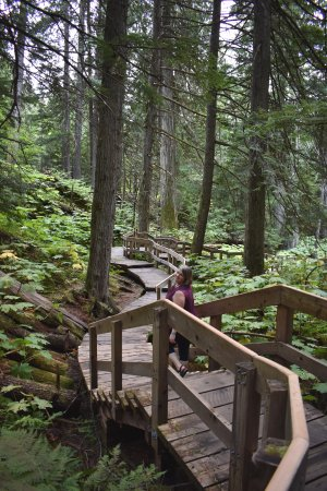 Giant Cedars Boardwalk Trail: This shows the stairs as you can see they are not steep