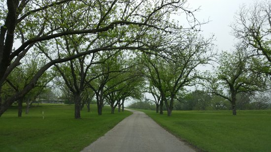 Haven River Inn: The drive up the hill, under the pecan trees.