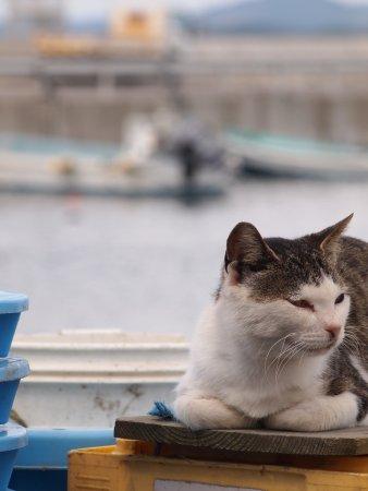 漁業関係の道具の上でのんびりしています