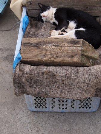 漁業関係のカゴも彼らの寝床です