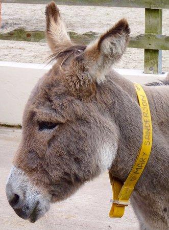 The Donkey Sanctuary: Donkey portrait