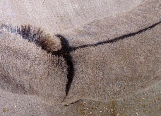 The Donkey Sanctuary: Cross on donkey's back