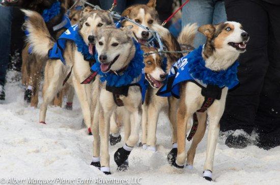 2018 Iditarod Rennen Start