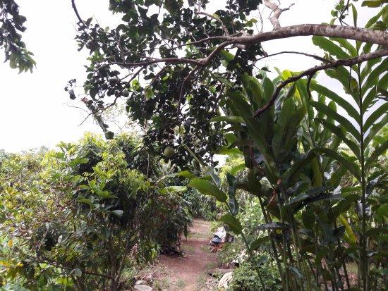 Ba Linh Homestay : Garden