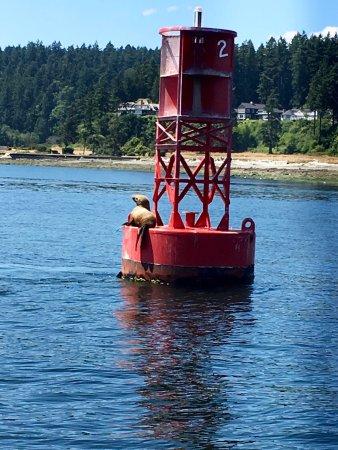 Bainbridge Island, واشنطن: photo5.jpg