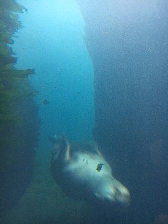 Seward, AK: Alaska SeaLife Center