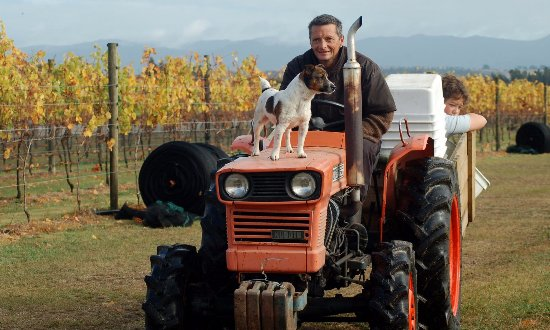 ‪‪Martinborough‬, نيوزيلندا: Glenn - Vineyard Manager with Russell his dog‬