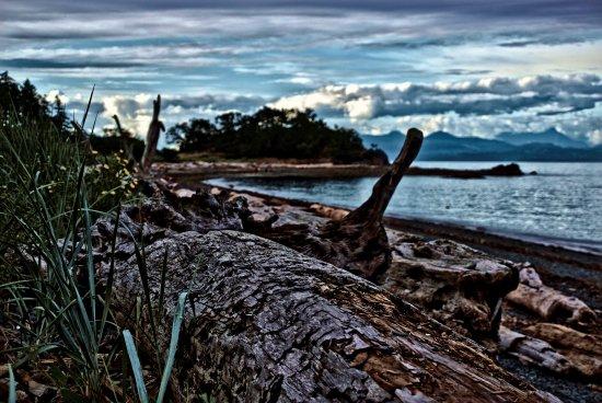 Nanaimo, Canada: Driftwood at Pipers Lagoon