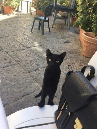 Trattoria Castel Dell  Ovo: Lunch companion - sweet little local cat
