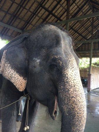 Sam Phran, Tayland: photo3.jpg