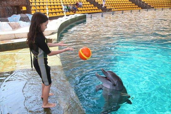 Kish Dolphin Park