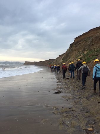 Isle of Wight Fossil Hunts - Island Gems: photo1.jpg