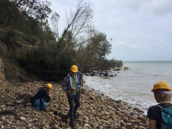 Isle of Wight Fossil Hunts - Island Gems: photo2.jpg