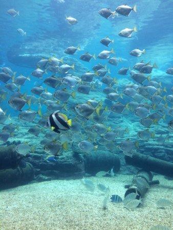 uShaka Marine World: Inside the Aquarium, nice feeling indeed